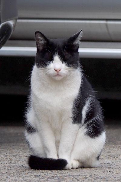 目を閉じている猫 白黒猫 しっぽマフラー