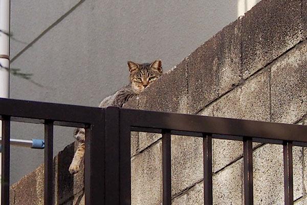 タビッツ 見てる塀の上から