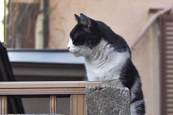 suzu profile