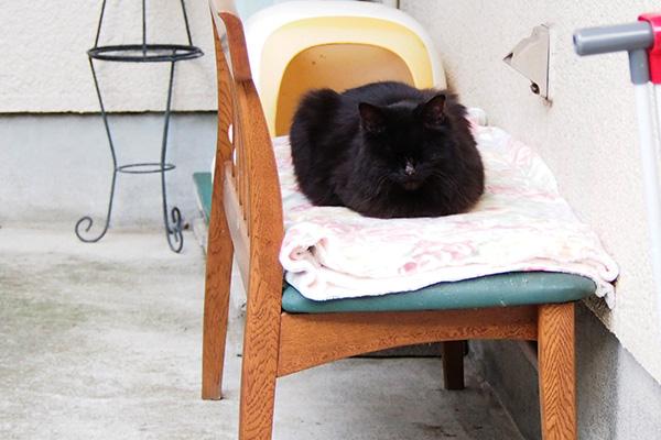 長毛黒猫 ベンチ独占