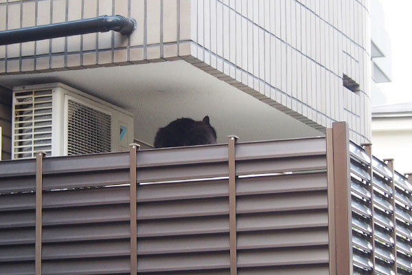 黒猫 給水タンクの上