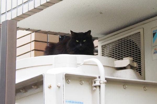長毛黒猫 タンクの上