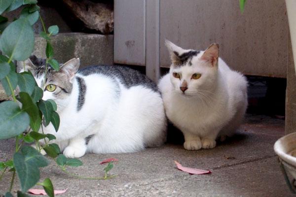 ケイとオーロラ2