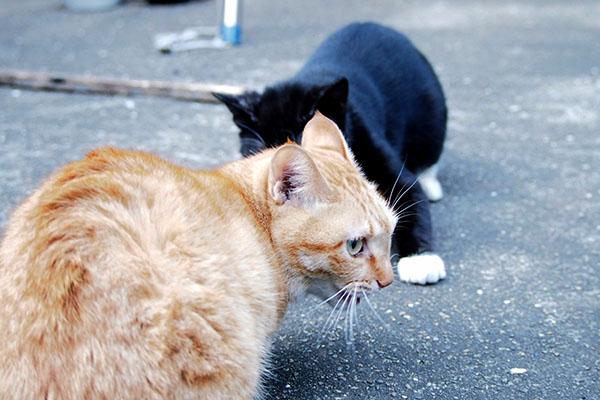 遊ぶ猫 後ずさる白黒猫