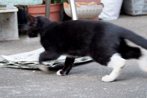 走り去る白黒猫
