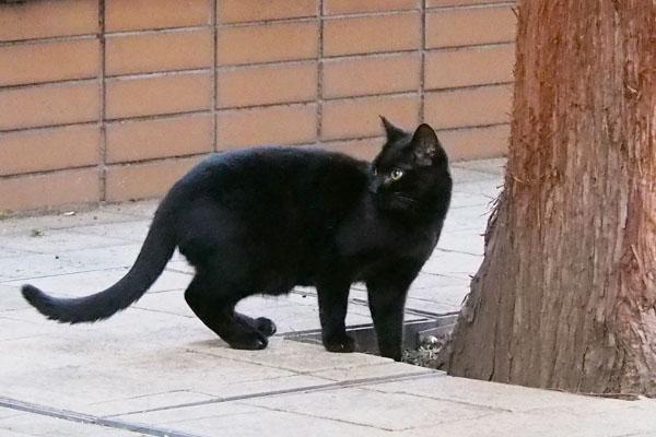 長いしっぽの黒仔猫