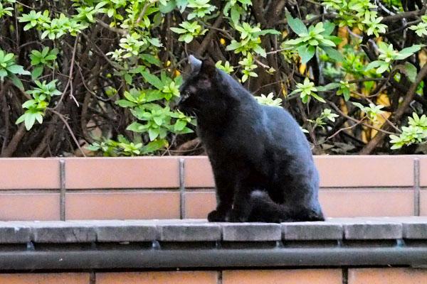 ちび仔猫前を向く 黒猫
