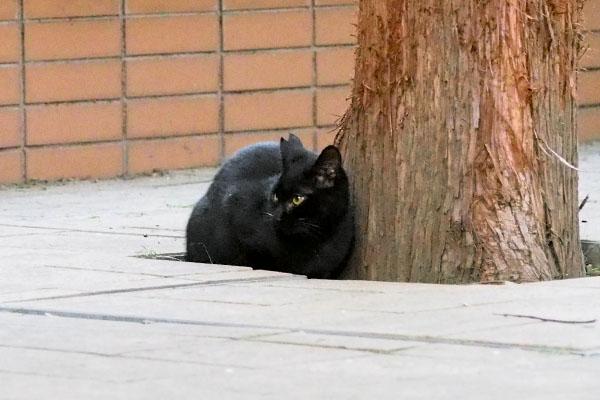 black kitten has neuter mark