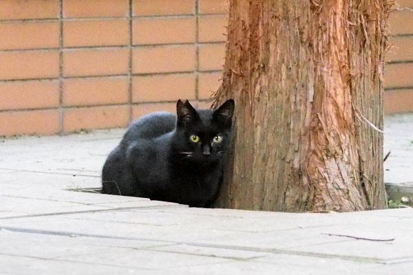 さくら猫 黒仔猫