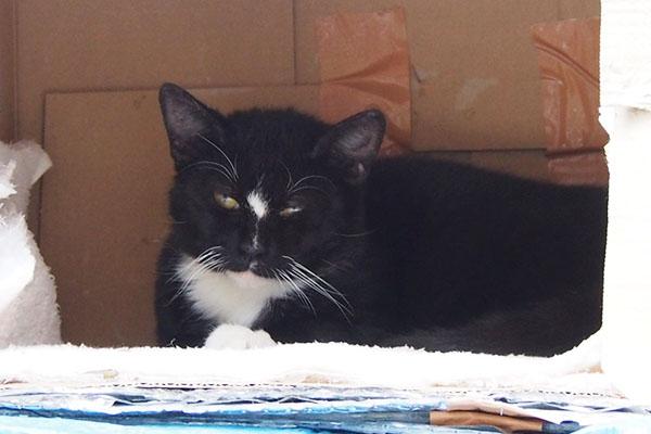 白黒マスク猫 ホラーな目付き ほの