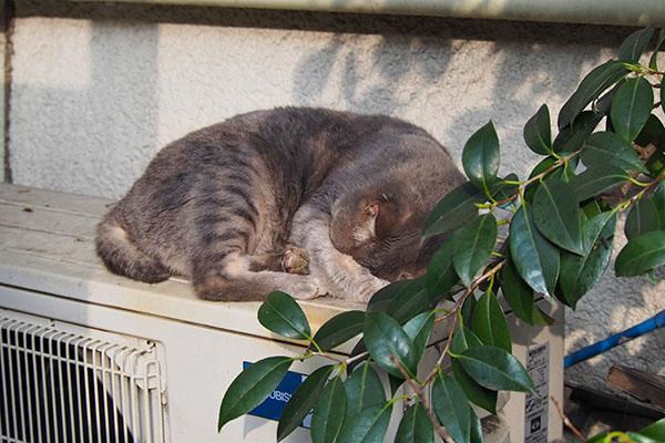 sleeping Cipi