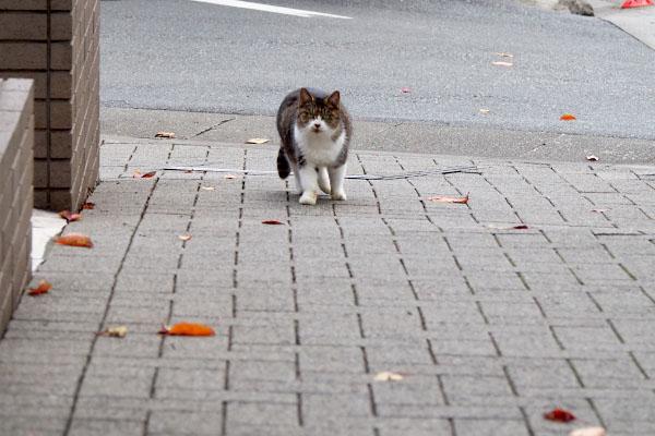ぽっちゃりな猫が来る