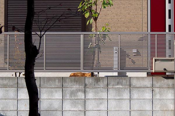塀の向こうに寝ているコルレ