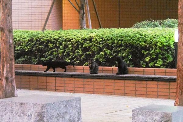 ビル群 アンジュと黒仔猫2