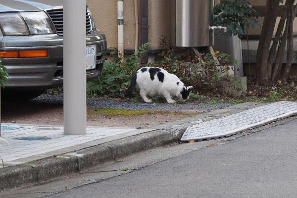 路地1 坊道草を食う