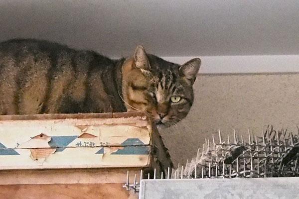 new tabby cat at E3