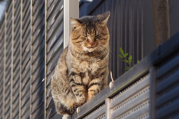 Tokky sitting on the fence