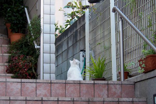 チロル よそ様宅階段