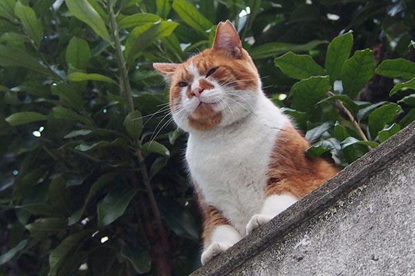 塀の上 黒猫ズを見て ムートン