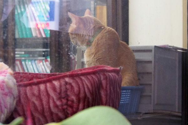 他の猫さんの動きを ちゃーちゃん