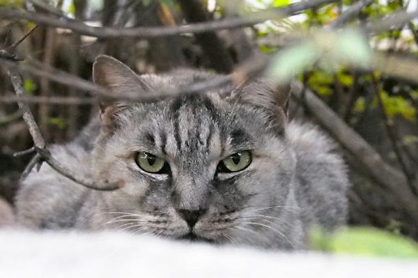 gin hide in bushes
