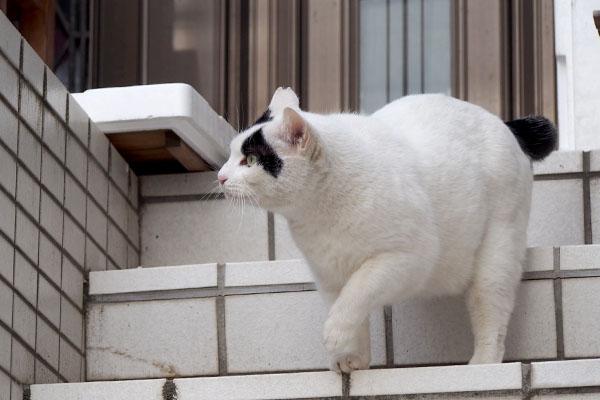 上を見る ヤコ