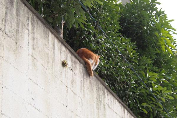 塀の上 背中 ムートン
