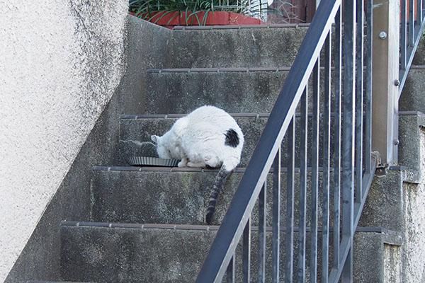 階段の途中で食事中 テン