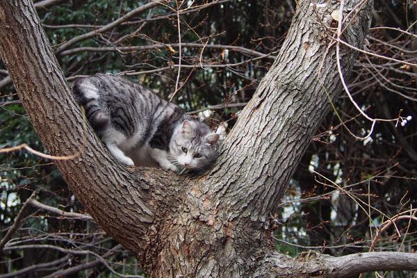 木の股まで来た クロム