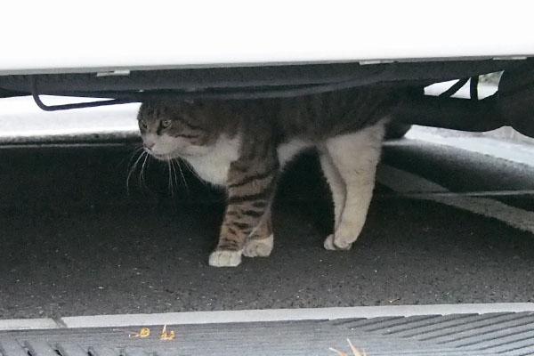 車の下を抜ける キックス