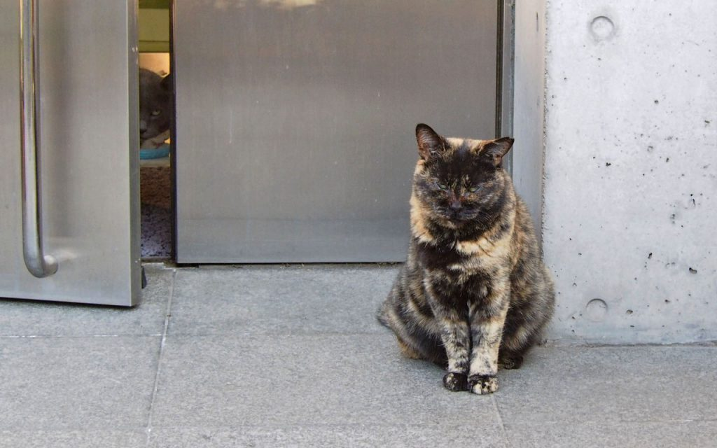 door open with cat size