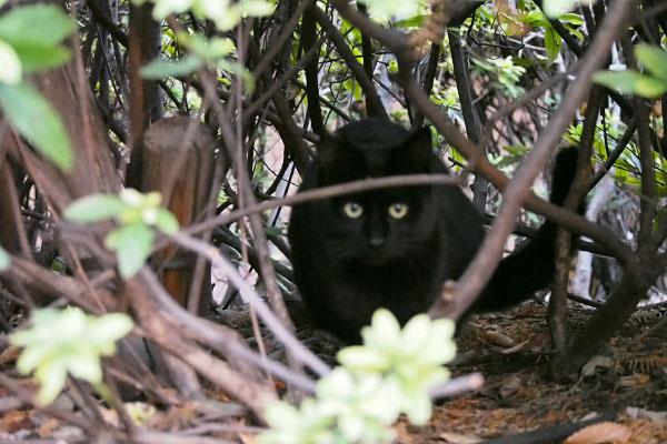 黒仔猫 ピンボケ