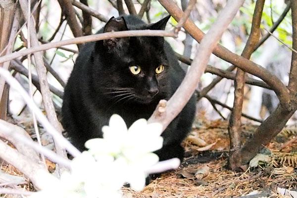 横向く黒仔猫