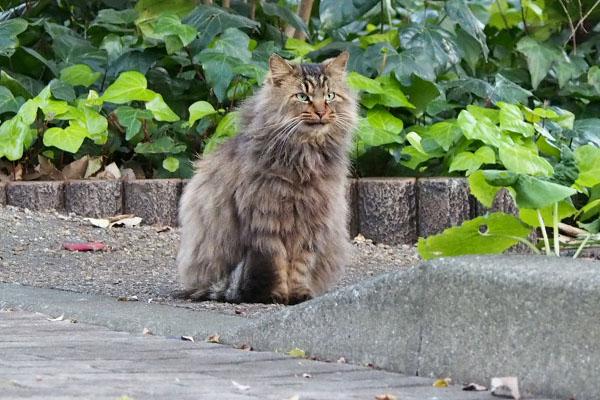 メレンゲ 猫背披露