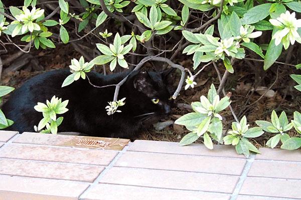 白いヒゲの黒仔猫