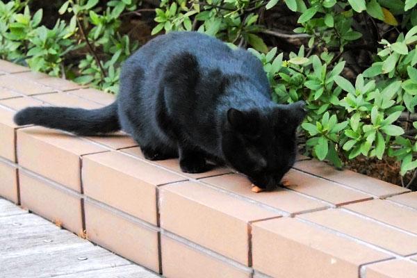 食べる黒仔猫