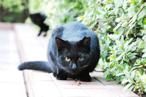 こっち見てる黒仔猫