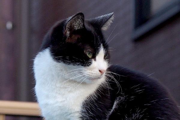 suzu profile right