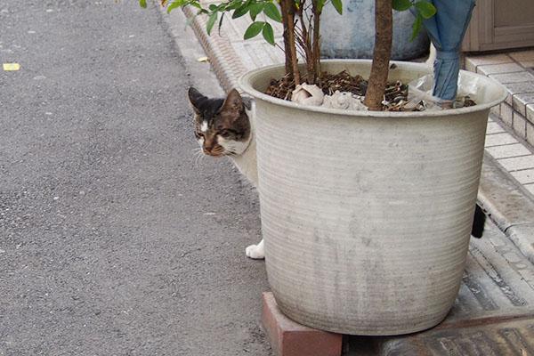 オンブレ植木鉢の向こう