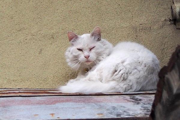 白猫さんズーム