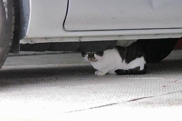 オンブレ 車の下に