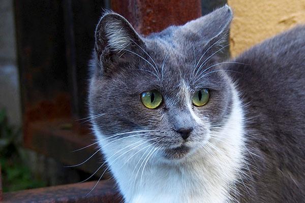 chibi face closeup