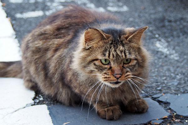 maron meow