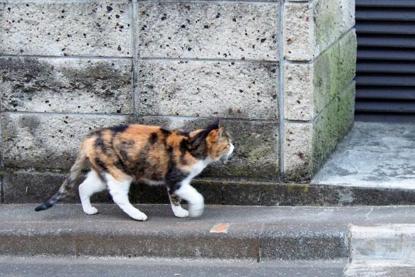 歩くオトワ