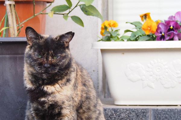 お花とサビチッチズーム