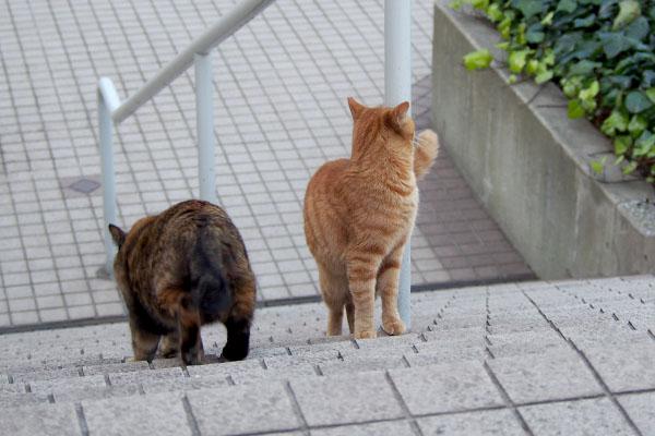 階段を駆け下りるラコと振り向くアン