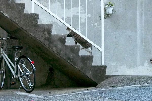 階段を上るキックス