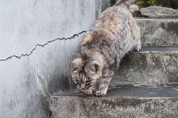 食べる気満々の銀 階段を下りる