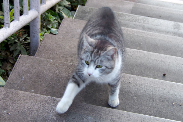 クロム階段を上がって来る