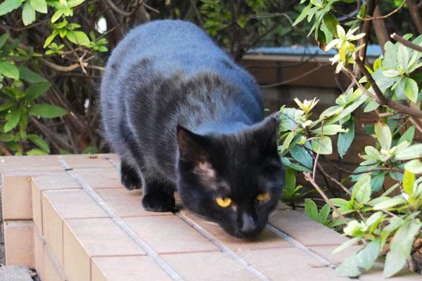 黒仔猫 すんすん